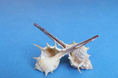 スパイラル貝。海を想像します。