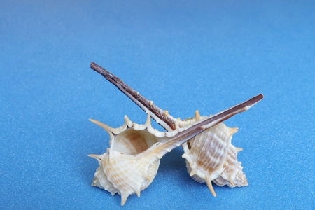 thorn tip: Spiral shellfish. To imagine the sea.