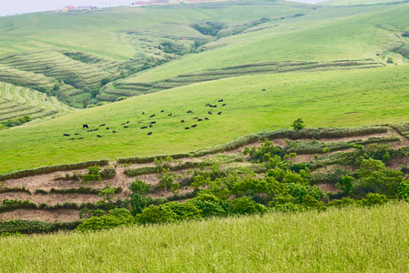 ice age: Soya hill. 20000 years the hill, which is formed in front of the Ice Age. Soya hills and Pasture.