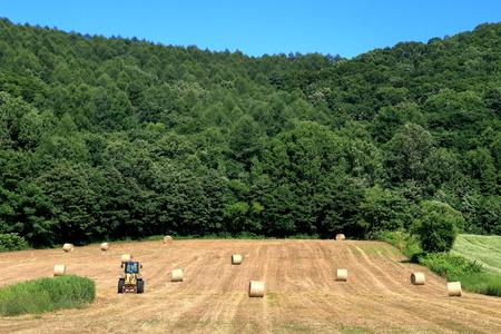 cattle breeding: roll bale. Hay roll. Stock Photo