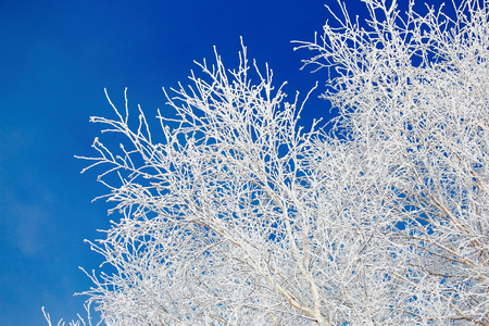 reckon: The soft rime the tree which is done. Stock Photo