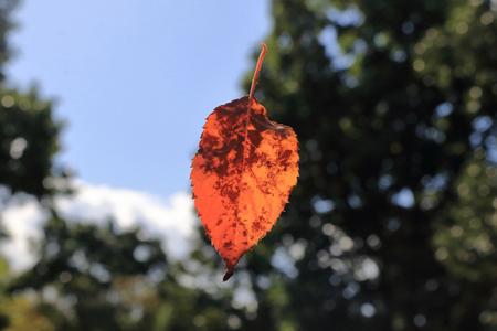 dode bladeren: Dode bladeren die vallen.