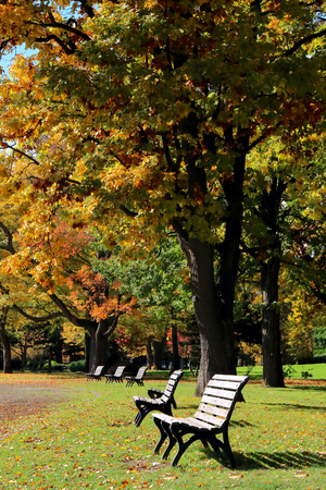 Autumn leaves and side by side bench.