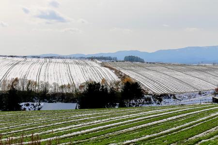 初冬の美瑛の丘。雪は、フィールドに線を引いた。