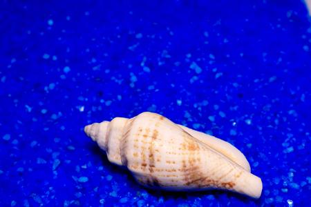 Seashell and blue sand