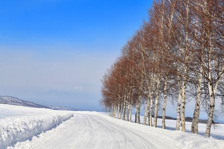 白樺の木と雪道 写真素材 - 74090474