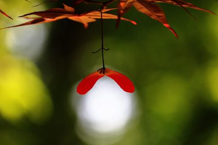 Autumn leaves like light bulbs