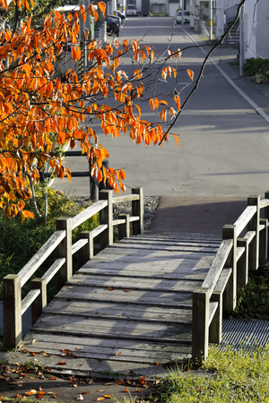 Bridge and the tinted autumn leaves of the wood product
