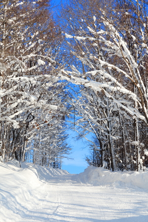 Snow covered trees in a forest forming a natural tunnel Stock Photo
