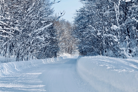 Snow lined avenue