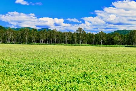view point of buckwheat field in Horokanai