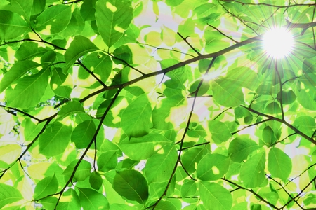Synthesis of fresh green and the sun