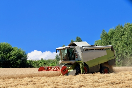 Harvest of wheat of Biei hill 写真素材