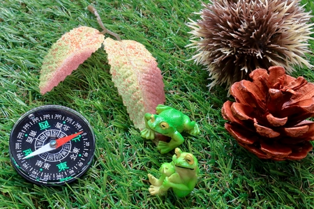 Compass on a green grass texture Stock Photo