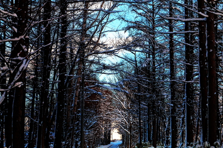 Exit the winter forest