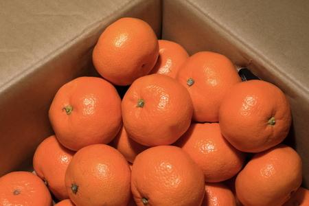 Box of oranges 写真素材