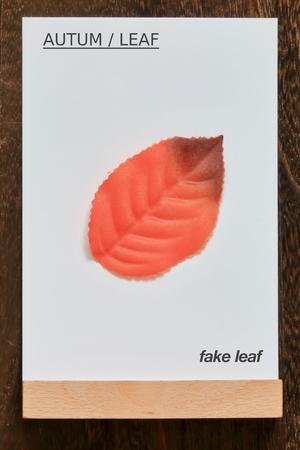 leaf.fake leaf. AUTUM  LEAF 写真素材