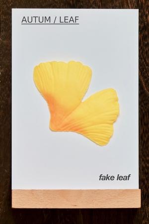 leaf.fake leaf. AUTUM / LEAF 写真素材 - 116548709