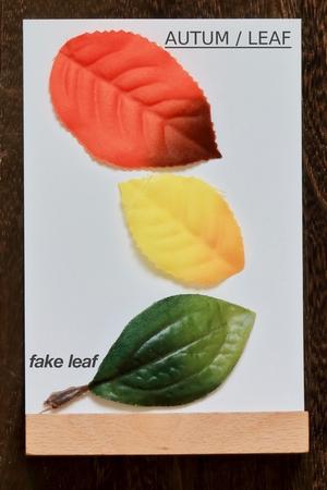 leaf.fake leaf. AUTUM / LEAF 写真素材 - 116548713