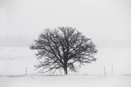 One tree in the winter haze