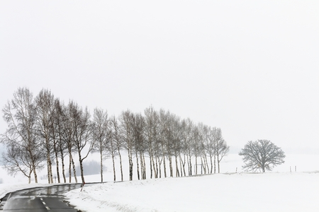 Tree-lined streets in the winter haze Stock Photo
