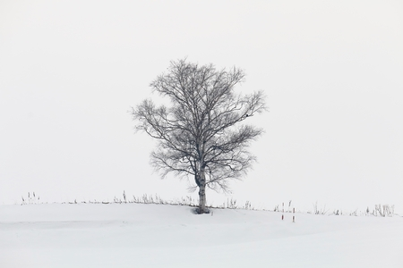 Tree in the snow  obakenoki