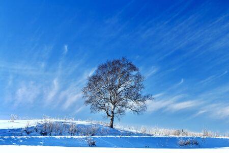 Trees in Biei town in winter