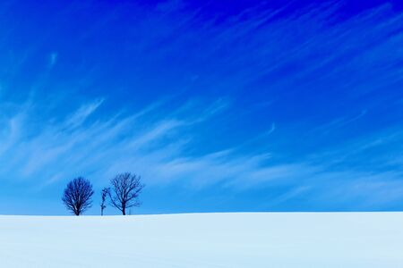 Three trees 写真素材