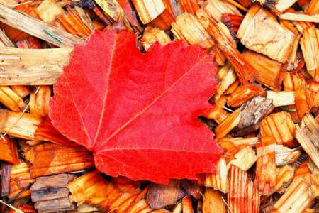 Autumn leaves One Autumn Leaves