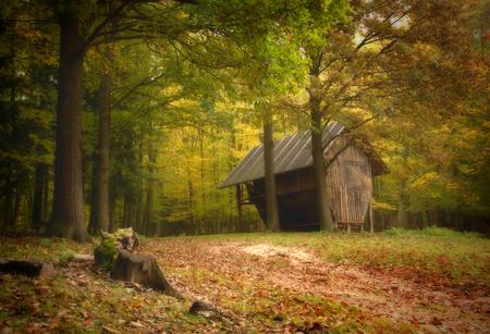 hayloft: Hayloft in autumn forest.In the foreground stump.