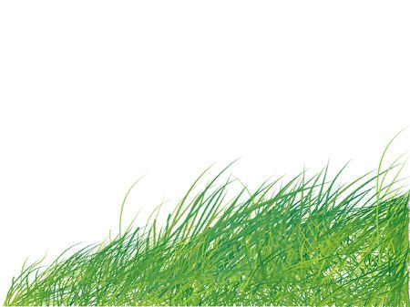 Grass silhouette green, summer background Vector