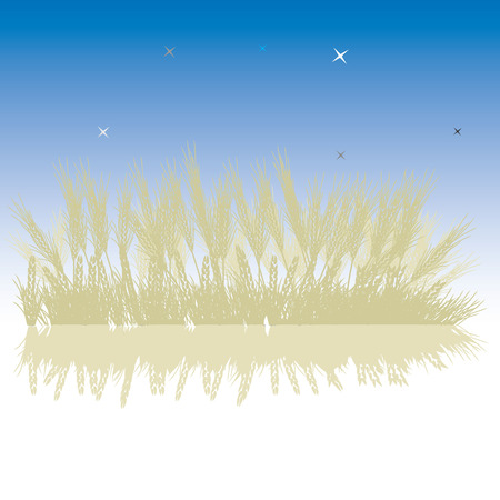 Grass silhouette wheat, night sky Vector