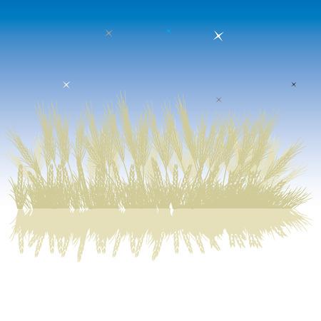 Grass silhouette wheat, night sky Vector