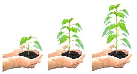 Crecimiento de plantas  Foto de archivo - 2887252