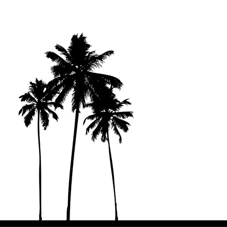 palm: Palm tree silhouette black