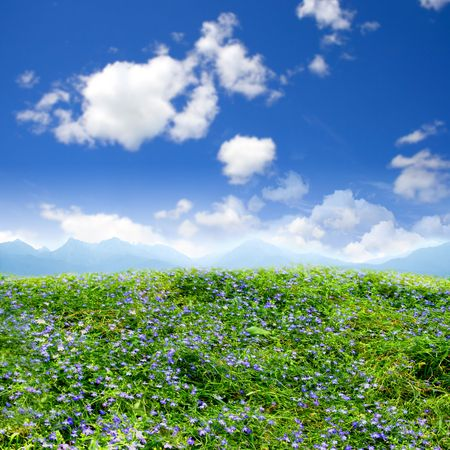 Green field beautiful, flowers photo