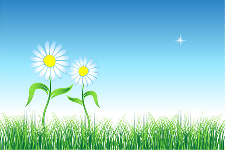 Camomile on green field Stock Vector - 3477121