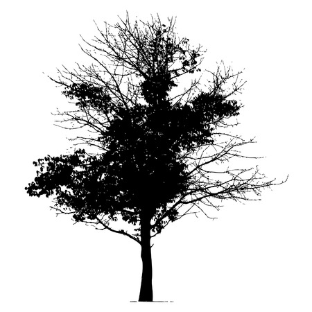 Árbol silueta negro