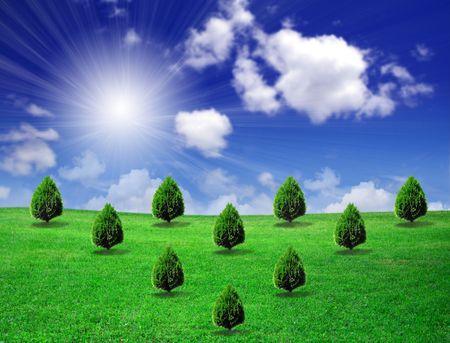 Trees on green field photo