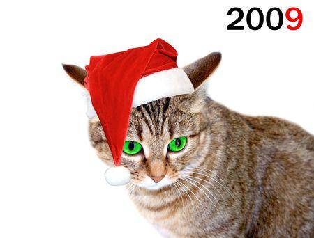 Christmas cat Stock Photo - 3934122