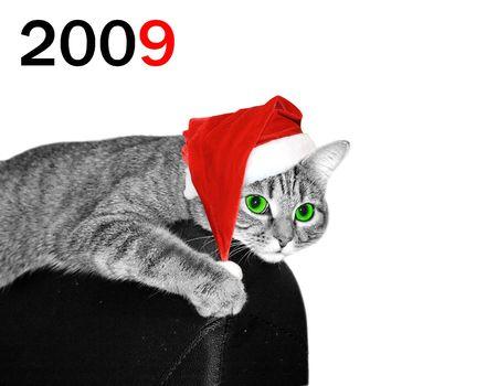 Christmas cat Stock Photo - 3934117