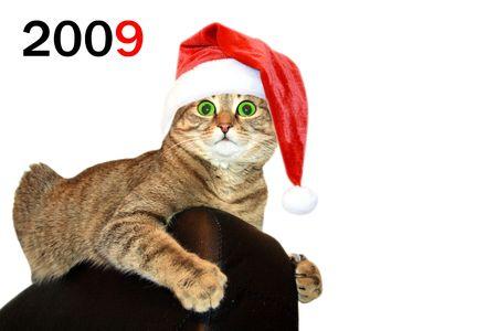 Christmas cat Stock Photo - 3934118