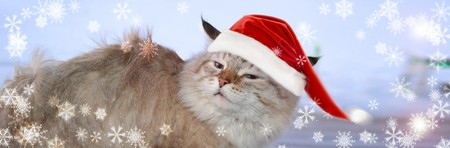 Christmas banner, cat santa photo