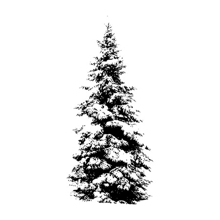 고요한 장면: Pine tree, vector illustration for your design 일러스트