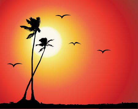tropical sunset: Tropical sunset, palm tree silhouette