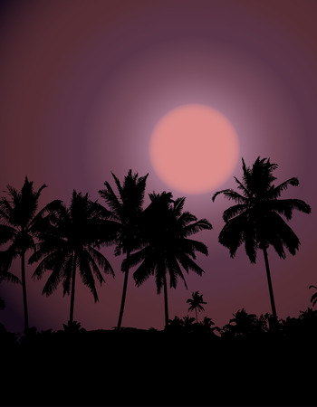 Tropical sunset, palm tree silhouette Stock Vector - 4277566