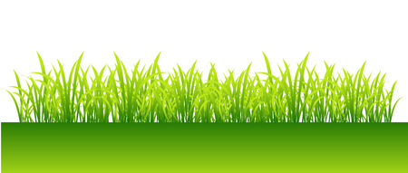 Spring, green grass for your design Vector