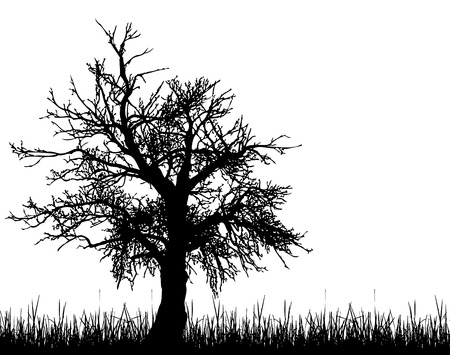 solitary tree: Old tree silhouette Illustration