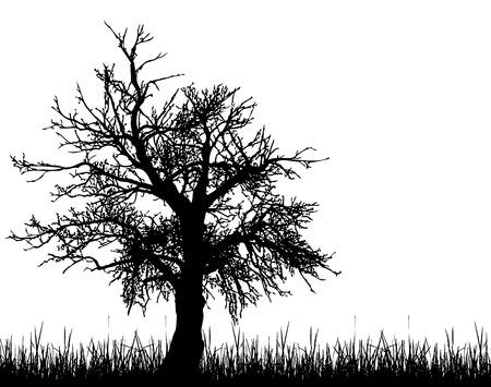 dode bladeren: Oude boom silhouet Stock Illustratie
