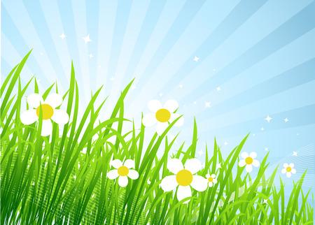 Spring meadow beautiful Stock Vector - 4562260